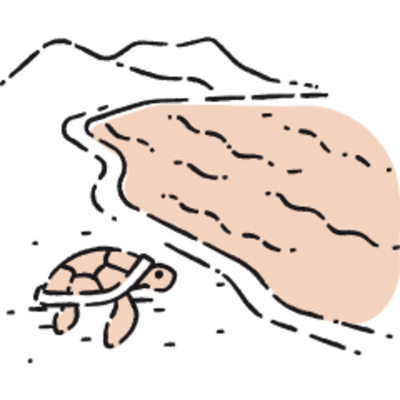 Turtles at Torre Salsa